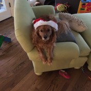 Shafer lounging in her Santa hat.
