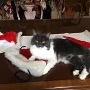 Sofia lounging on Santa hats.